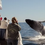 explore-whale-watching