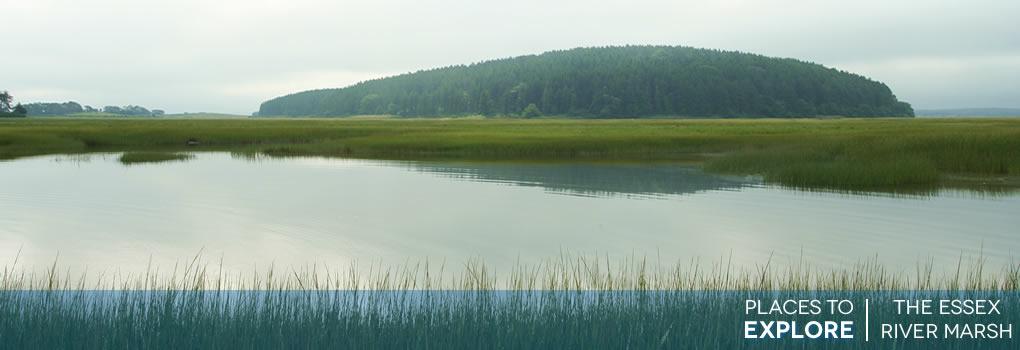 river-marsh