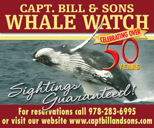 Captain Bill & Sons Whale Watch
